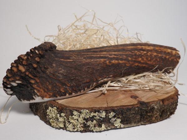 bois de cerf entier