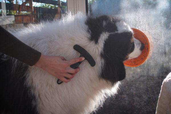 lickimat chien berger de bosnie brossage