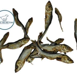sprats de poissons séchés récompense pour chien