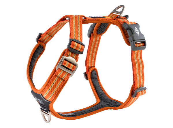 harnais orange dog copenhagen