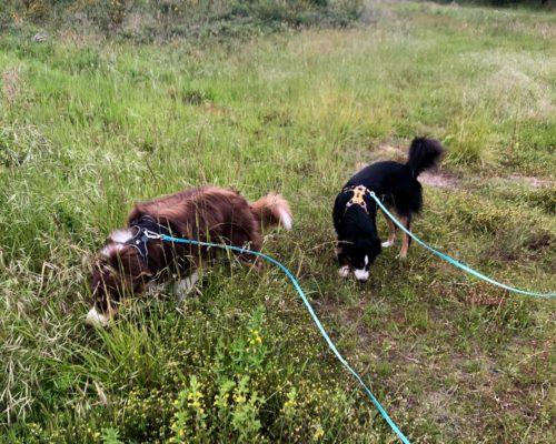 longes biothane 10 mètres pour chien